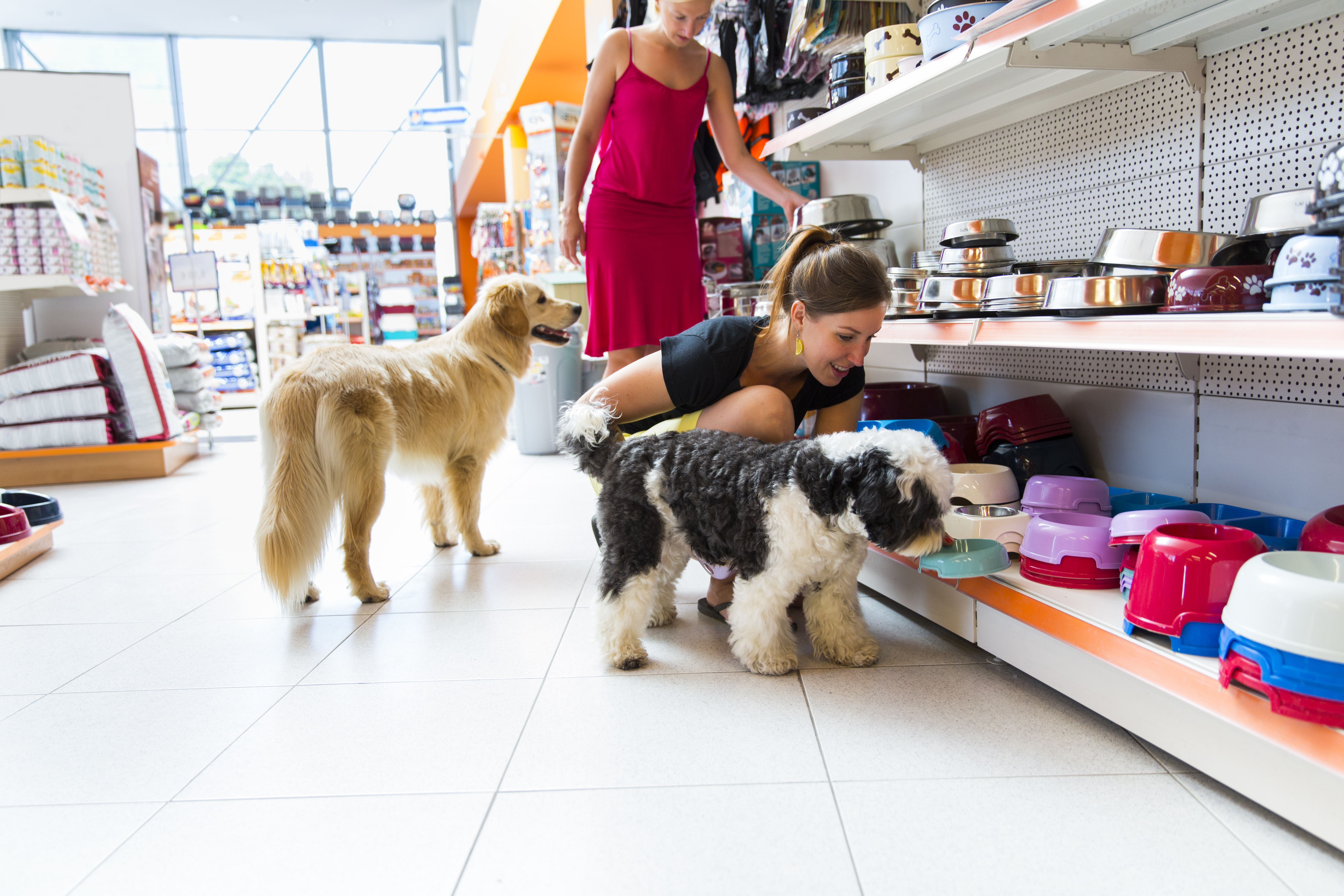 Companion Dog Letter Template - Marketing Strategy for Pet Shops